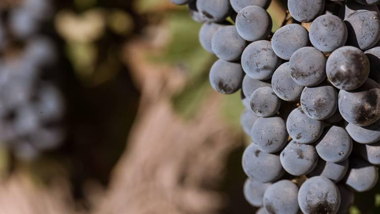 El salto de calidad del vino argentino