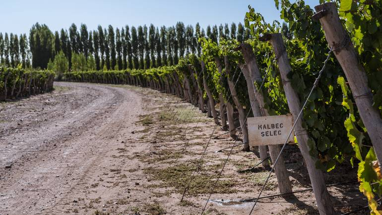 Malbec: our own identity expressed in our wines