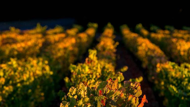 Night harvest in Rutini Wines